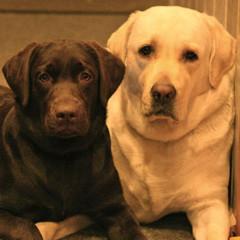 Долли и Шелли
