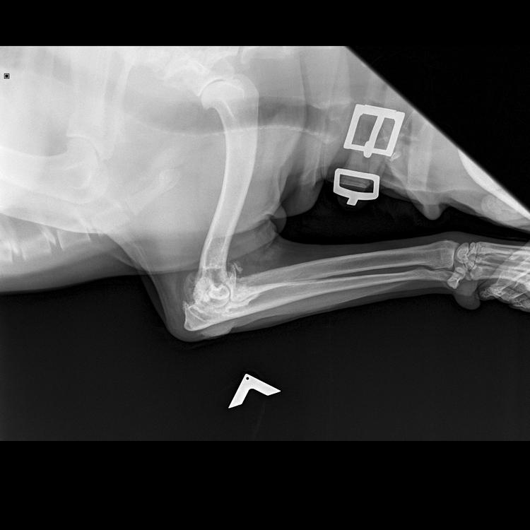 Скелет Крупный 25-45 kg -Тазовые  кости VD-17.05.2015-16_21_53-104.JPEG