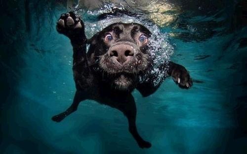 pic-9-dogs-ball-underwater-camera-30953.jpg