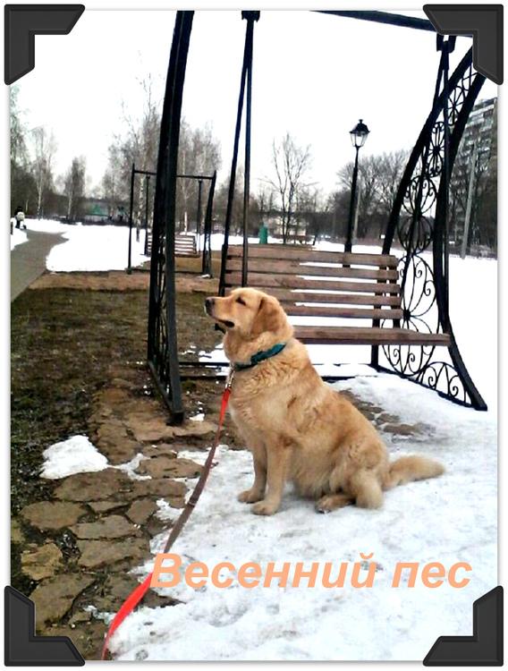 весенний пес.jpg