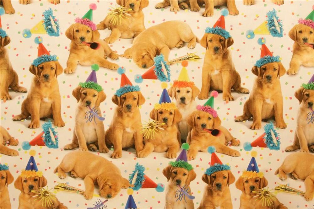 Картинки, открытка с днем рождения с собачками и кошками