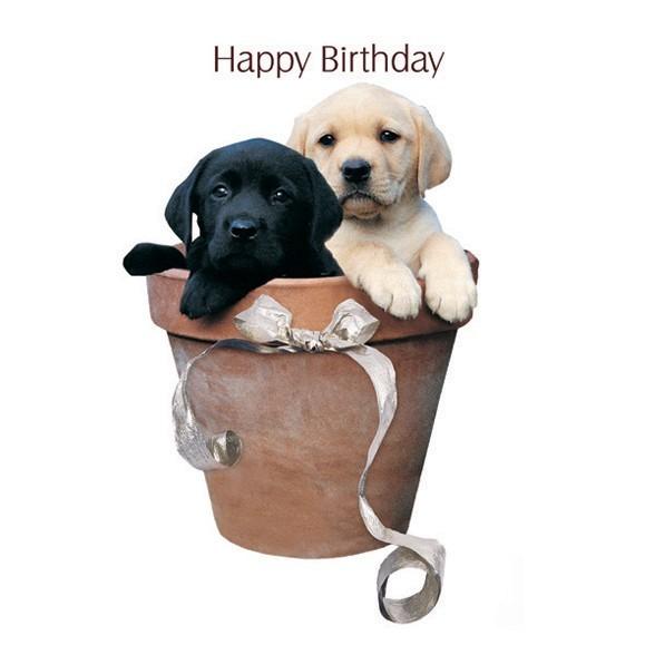 Открытки с днем рождения с лабрадорами