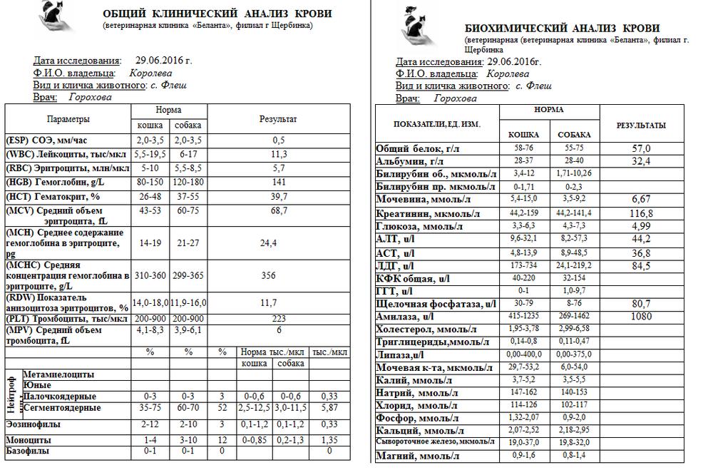 Крови таблица клинический анализ на гемотест цена анализы крови цены