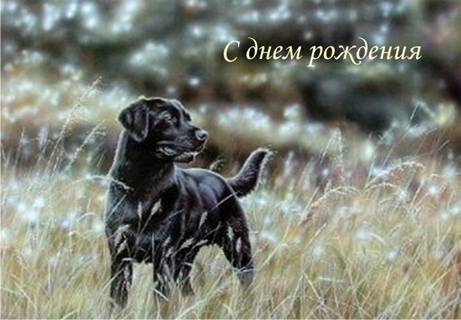 Поздравления с днем рождения картинка с черным лабрадором собакой женщине