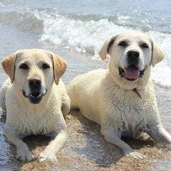 во сколько месяцев можно забирать щенка