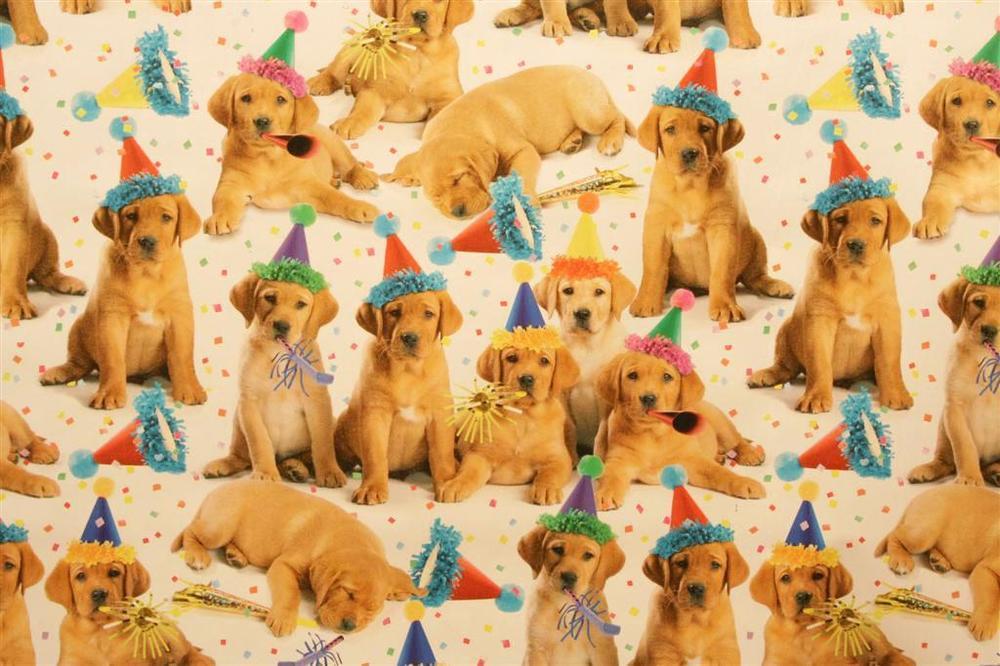 телешоу поздравления с днем рождения с собаками далматинцами платья, как золушки