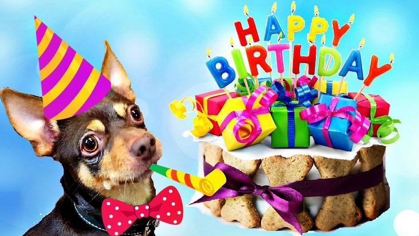 Днем рождения, поздравительная открытка для собаки