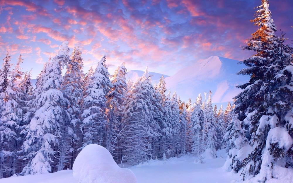 Заснеженный лес.jpg