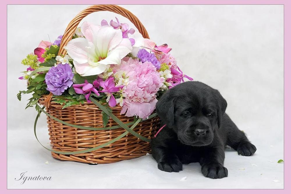С днем рождения щенков открытки
