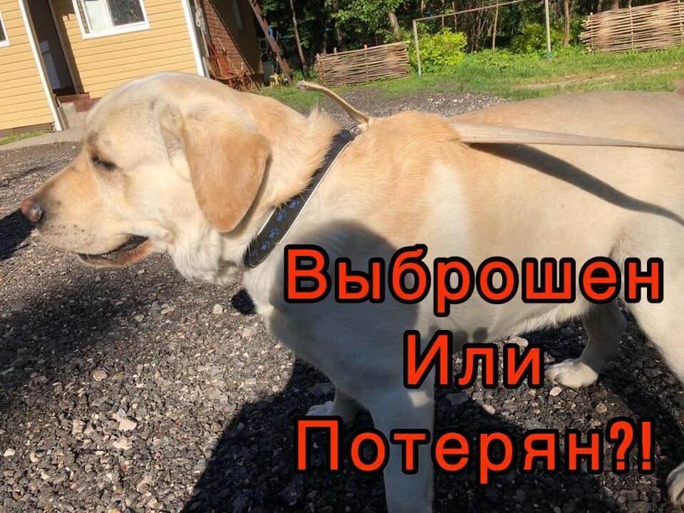 FB_IMG_1526990848506.jpg