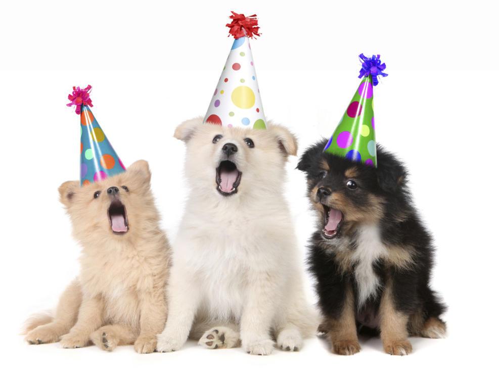 картинки с собачками и кошечками с днем рождения минуту мальчик