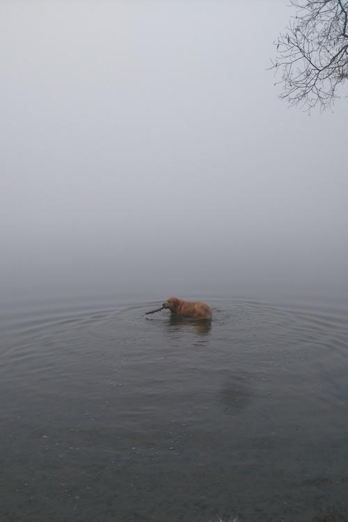 ежик в тумане.JPG