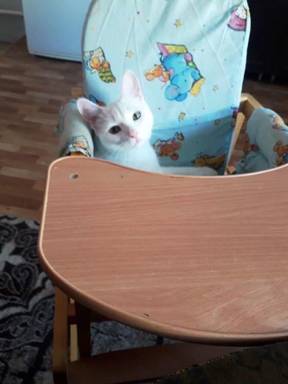 детский стульчик.jpg