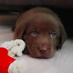 Молодая мамочка щенка