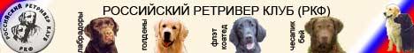 Российский ретривер клуб. Щенки. Лабрадоры, голдены, прямошерстные, чесапик-бей, ретриверы.